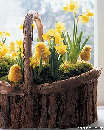 daffodils and moss basket