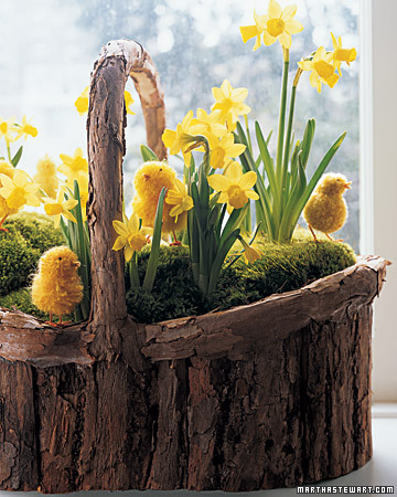 daffodils and moss basket
