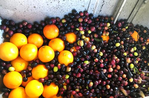 Olive Press milling