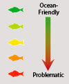 Fish Scale_Ocean Friendly-Problematic