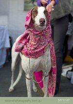 Best Dressed Pet