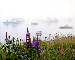 Lupine and Boates in the Fog by Gary Thompson