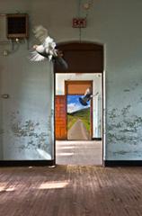 Flying In by Nancy Guzauski