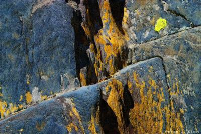Rock Lichen Abstract