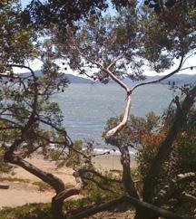 Point Richmond beach