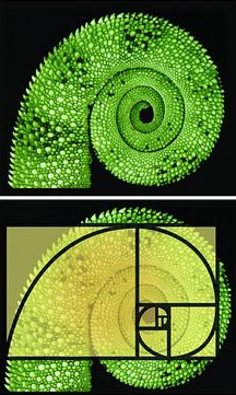 Chameleon tail Fibonacci spiral