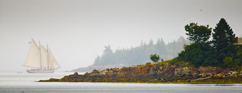American Eagle in the fog