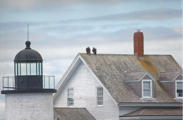 Eagles perched on lightkeeper's house