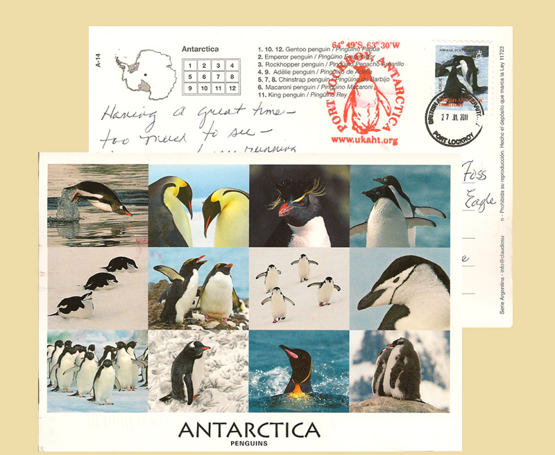 Antartica Penguins