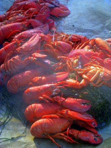 Lobster feast on the beach