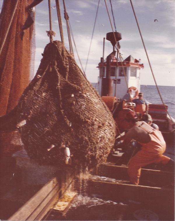 Bringing in a net-ful of fish aboard the schooner pre-1983
