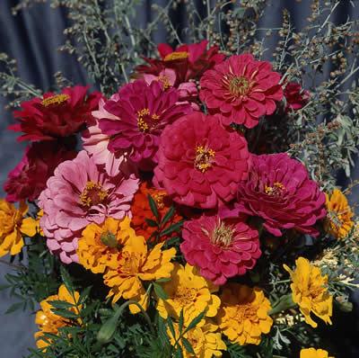 colorful-flowers.jpg