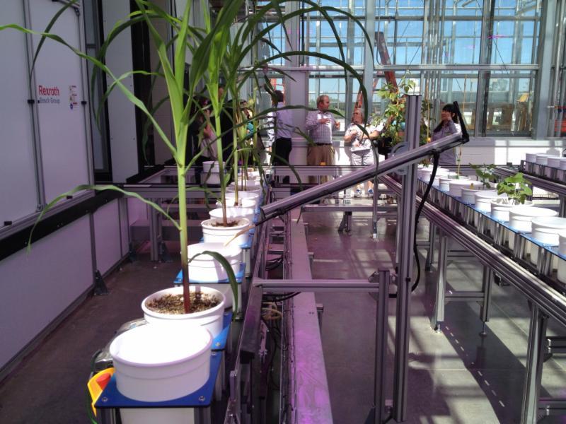 NIC greenhouse