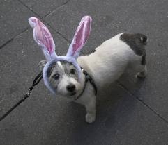 Dog with Ears