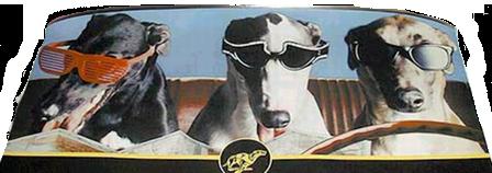 Test Drive a Greyhound