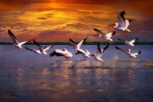 """""""Wings Across the Water"""" by Alan S. Maltz"""