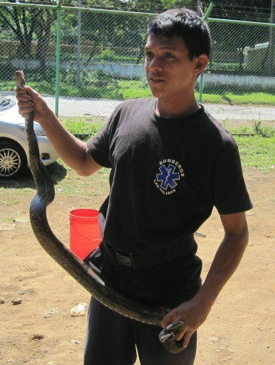 snake catching