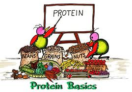 Protein cartoon