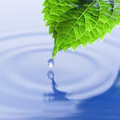 water drop off leaf