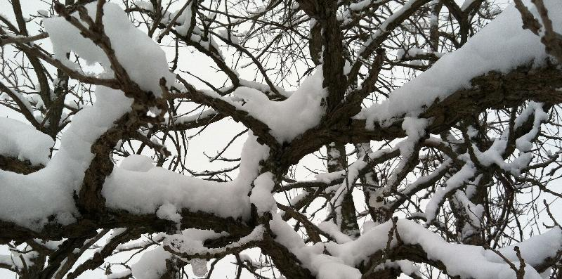 branchesw/snow