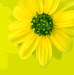 yellow-fade-flowers-header.jpg