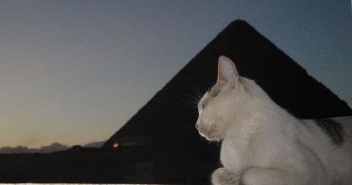 Baba Dez Word Tour Pyramid Cat