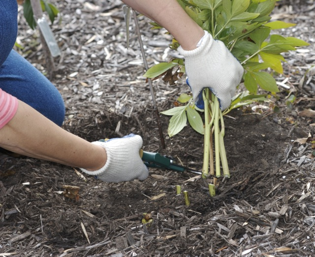 A Thorough Fall Clean Up Is The Best Way To Prevent Harmful Fungus From  Spreading In Your Garden.