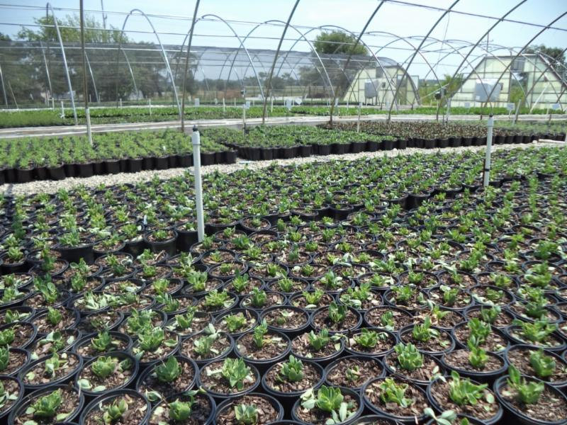 future crops of perennials