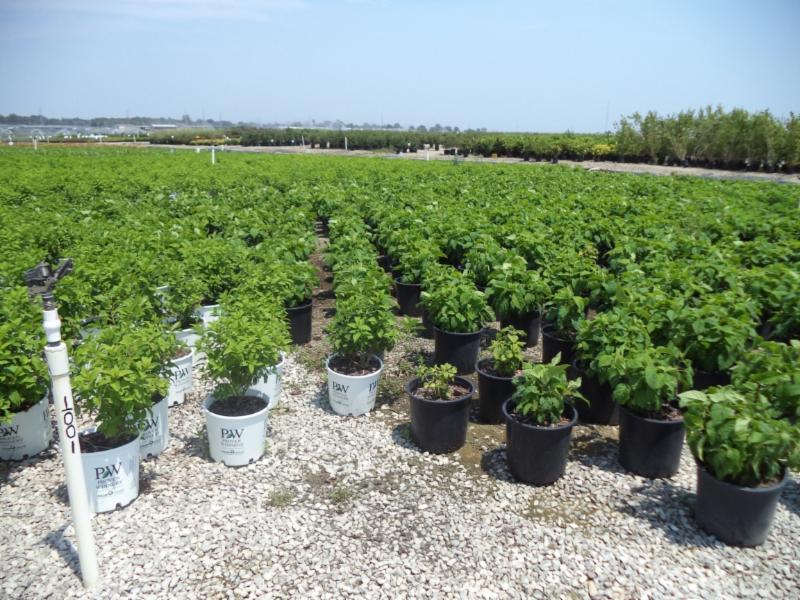 future crops
