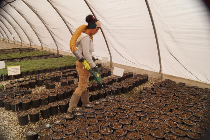 fertilizing perennials