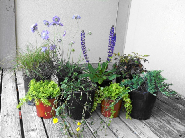 plant selection for containers