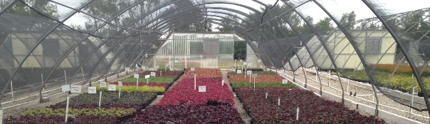 Heuchera house