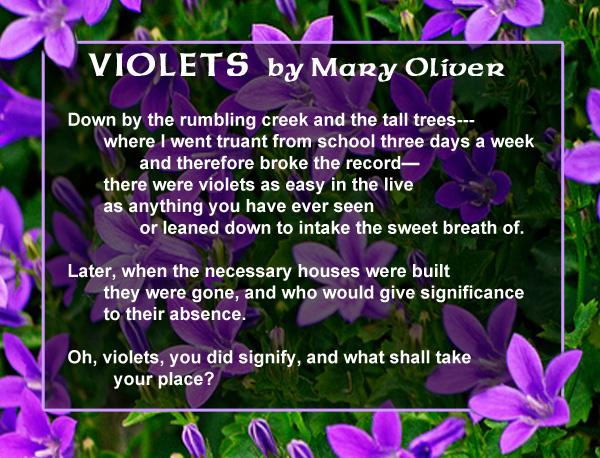 AbbySchwab_SharedInspiration_Violets