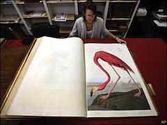 Audubon book