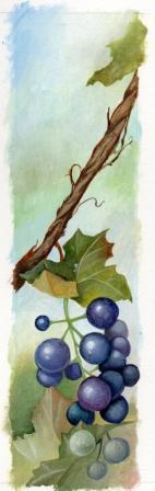 grape label
