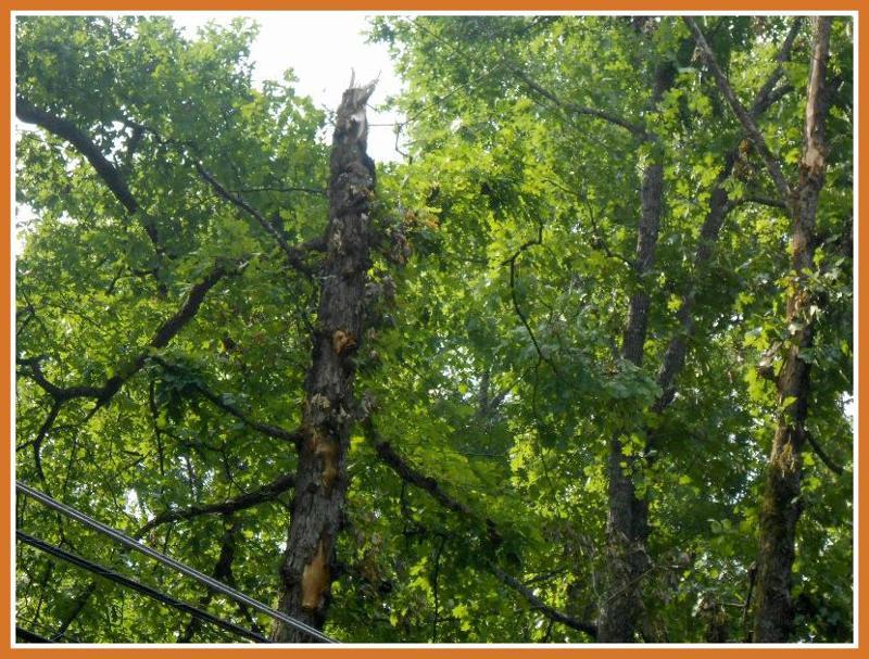 ROW-Broken tree by line