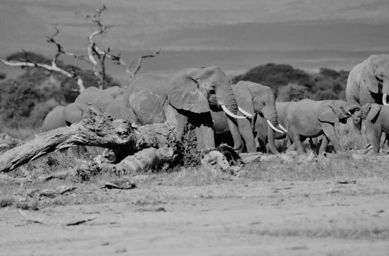 Stefano on safari in Amboseli