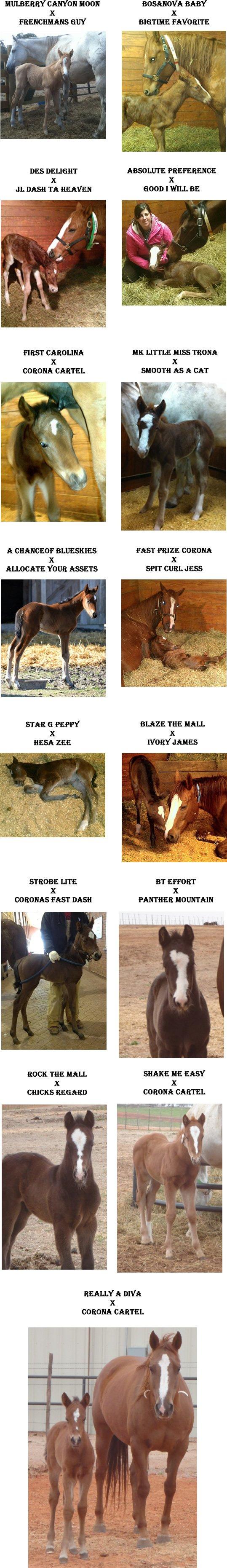 new foals