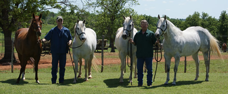 NFR Mares
