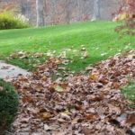 Fall Tips