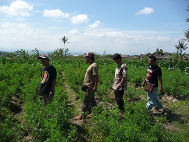 The Bebali Foundation dye team amongst the indigo in Java
