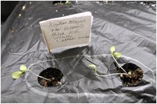 seedlings-white