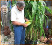 Al With Corn