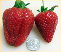 strawberries orange