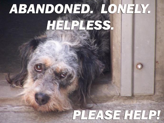 Abandoned Dog in Doorway