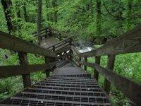 Amicalola Falls Stairs