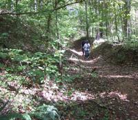 Chicopee Woods