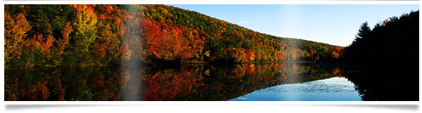 reflective-fall-trees-bnr.jpg