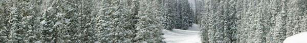 snowy-forest-banner.jpg