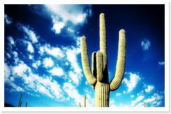 cactusb.jpg